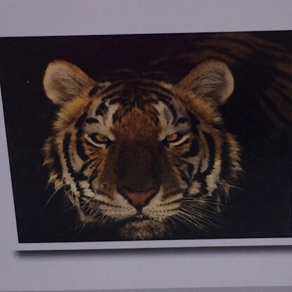 Diamond painting tigerhovede med sort baggrund