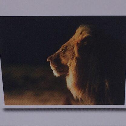 Diamont painting løve med stor manke